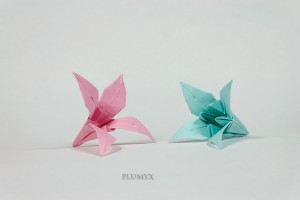 02_Flores_conjunto