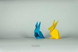 06_Conejos conjunto