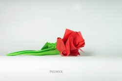 09_Rosa roja
