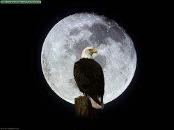 Aguila-Y-Luna (2)