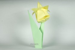 23_Tulipanes