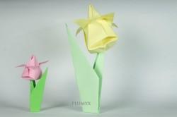 23_Tulipanes_conjunto