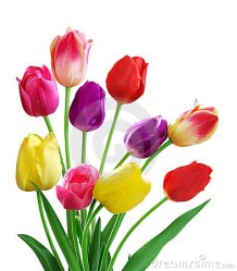 tulipanes-5199478