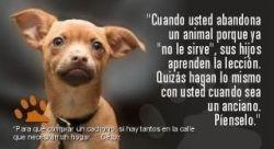 n_athletic_club_de_bilbao_perros_y_gatos-4011783