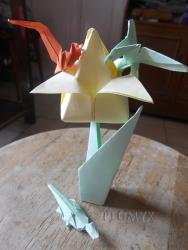 Tulipám2