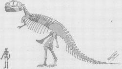 Ilustración de los restos de Tyrannosaurus de la descripción original de H.F. Oborn (1905)