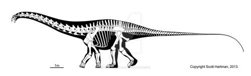 Esqueleto de Apatosaurus, por Scott Hartman