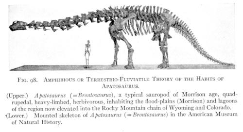Reconstrucción antigua de Apatosaurus