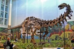 Apatosaurus lousiae en el  Dinosaur National Monument