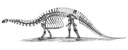 800px-Brontosaurus_skeleton_1880s
