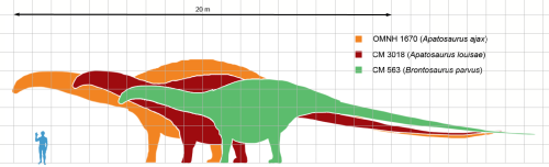 Apatosaurus_scale_mmartyniuk_wiki