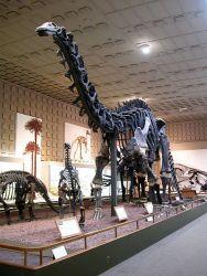 Yale_brontosaurus