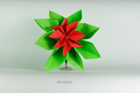 065_Flor Navidad_compuesta)