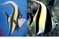 Gill Buscando a Nemo