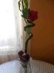 rosas7