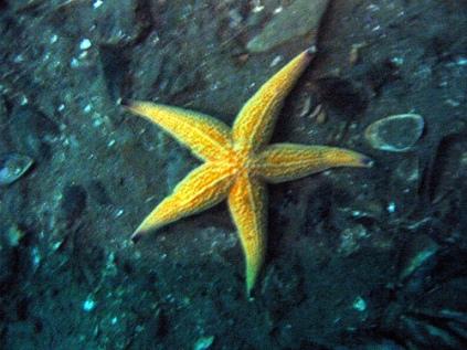 estrellas marinas