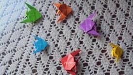 peces angel de colores