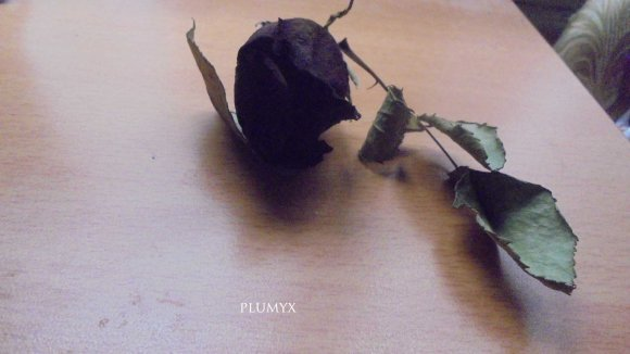 flor seca2