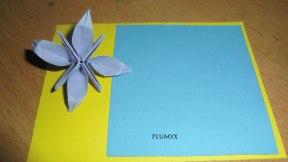 flor estrella notas